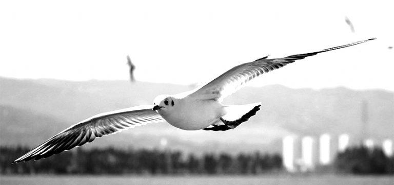 Taube vor einer Landschaft